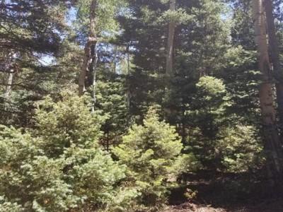 1.55 Acre Lot for Sale in Forbes Park