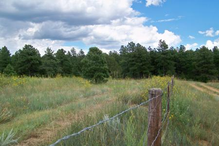 Hunting Property for Sale in Weston, Colorado