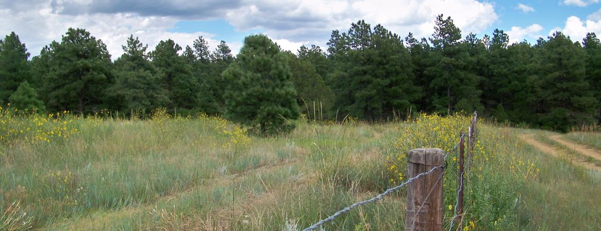 Vacant Land with mobile home on 5 acres for sale, for residential, hunting or vacation for sale  in Weston, Colorado